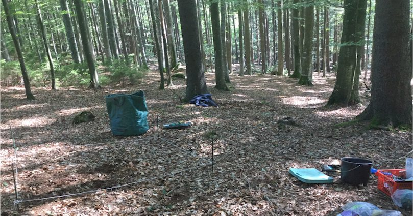 Field investigation to determine the biomasses of deer truffles
