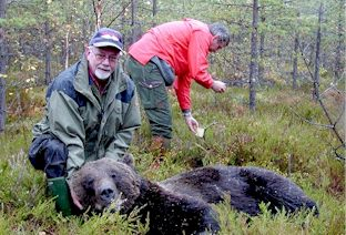 GPS tracking bears: immobilized bear