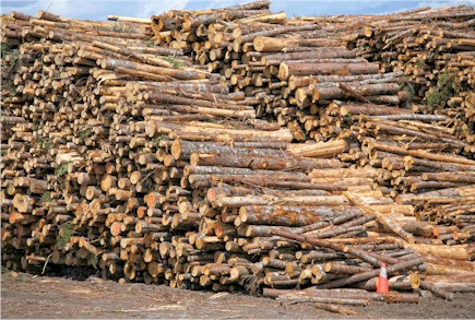 Wood can be radioactively contaminated by cesium 137 or strontium 90. There is no danger to wood from German forests.