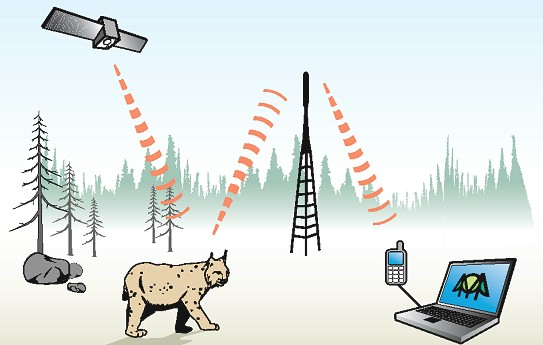 Explanation of the used GPS GSM Tracking sysem in this lynx telemetry pilotstudy