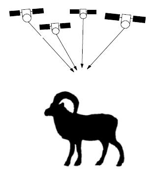Tracking mouflon (Ovis ammon musimon) with GPs collars. Determine habitat use of European mouflon sheep by GPS collars
