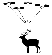 Overview of various tracking studies on red deer with GPS collars
